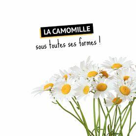 La #Camomille, un truc de mamies ? 🤔  Avec ce guide, vous ne verrez plus cette jolie petite #fleur comme avant ! 😏